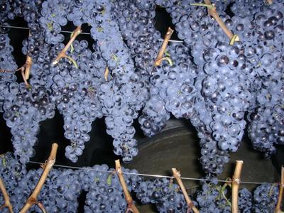 Hrozny odrůdy Frankovka ze sklizně 2005 v množství 35 000 kg ze kterého bylo vyrobeno víno  s přívlastkem Slámové víno v množství 5500 lt.