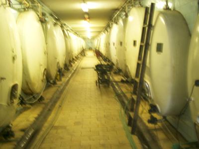 Sklep v Dolních Kounicích, kde jsou uložena převážně červená vína a vybrané šarže zde dozrávají v barriquových sudech.