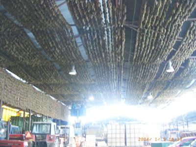Hrozny odrůdy Veltlínské zelené připravené na výrobu slámového vína ze sklizně 2003 v množství 50 000 Kg, ze kterého bylo vyrobeno 8000 lt. vína s přívlastkem Slámové víno.