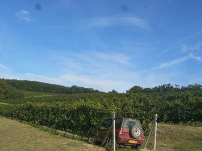 Vinice v Jezeřanech-Maršovicích na terasách ve stáří 37 roků, která téměř každým rokem dává přívlastková vína. Výjimkou nebyl ani letošní nepříznivý rok.