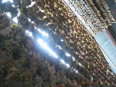 Toto víno zraje v lahvích o obsahu 0,2lt ve sklepě archivních vín a je připraveno k prodeji v kategorii  révových vín s přívlastkem.